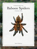 Baboon spiders